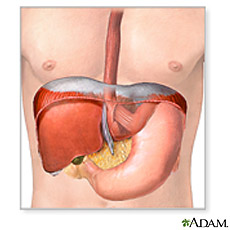 An illustration of liver, pancreas and stomach