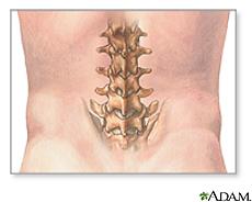 Ilustración de las vértebras lumbares
