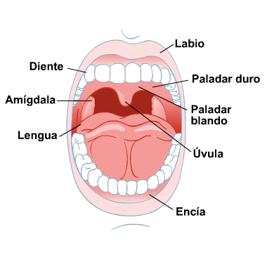 Body Map for Mouth and Teeth (Spanish)
