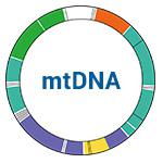 mtDNA images