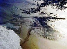 A photograph of oil-covered water