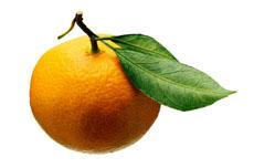 Una fotografía de una naranja