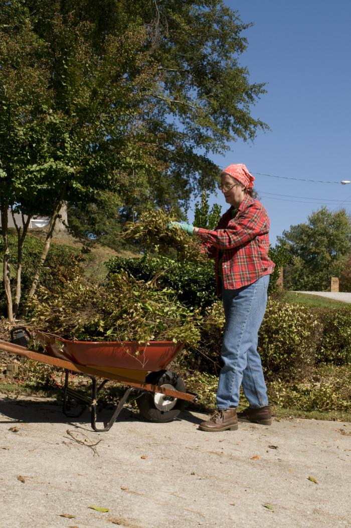 An older woman, working in her yard, wearing work boots, blue jeans, flannel shirt, and work gloves, with a bandana on her head, is trimming back bushes and placing the foliage into a wheel barrow.