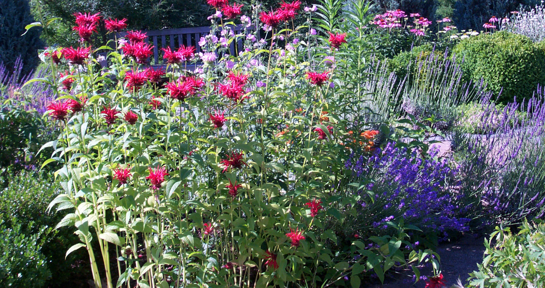 A flower garden with a variety of pink, red, white, purple and lavender flowers.