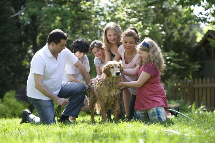 A family is in the backyard washing the dog. The mother, father, three daughters and a son are all helping to wash the dog and the father is also holding the dog's leash.