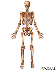 Illustration of the skeleton