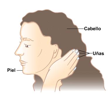 Body Map for Piel, cabello y uñas
