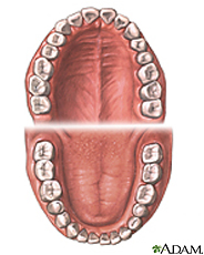 Illustration of normal teeth