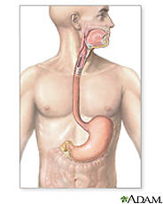 Illustration of the upper gastrointestinal system