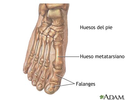 Dedos del pie normales