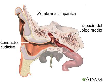Inserción de un tubo en el oído - Serie—Anatomía normal: MedlinePlus ...