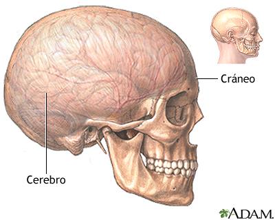 Craneotomía - Serie—Anatomía normal: MedlinePlus enciclopedia médica