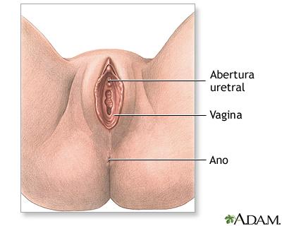 Salchichas en la vagina
