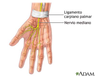 Reparación quirúrgica del túnel carpiano - Serie—Anatomía normal ...