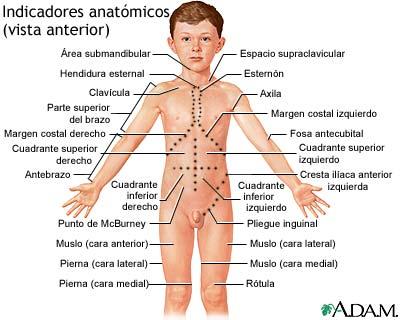Vista anterior de puntos de referencia anatómicos