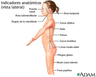 Vista lateral de puntos de referencia anatómicos