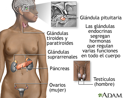 Glándulas endocrinas: MedlinePlus enciclopedia médica illustración