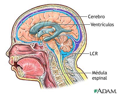 Hidrocefalia - Serie—Anatomía normal: MedlinePlus enciclopedia médica