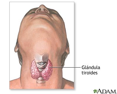 Tiroidectomía - Serie—Anatomía normal: MedlinePlus enciclopedia médica