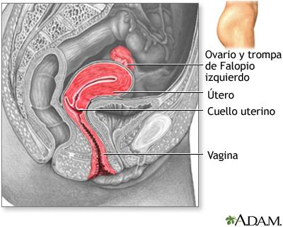 Vista sagital lateral del aparato reproductor femenino