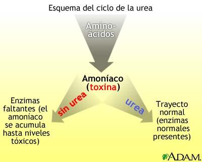 Ciclo de la úrea