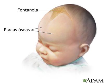 imagen fontanelas en el bebe cabeza de un bebe