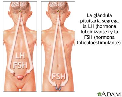 Hormonas hipofisarias