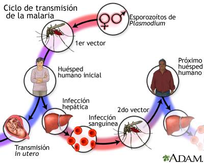 مرض الملاريا 17248