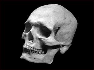 Cráneo de un adulto