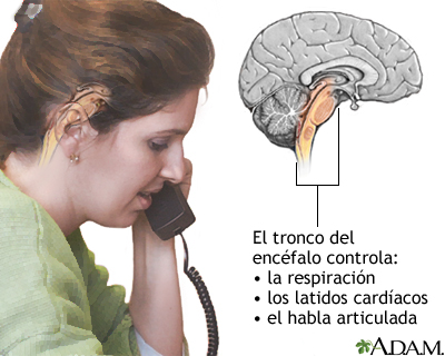 Función del tronco del encéfalo