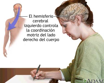 Función del hemisferio cerebral izquierdo