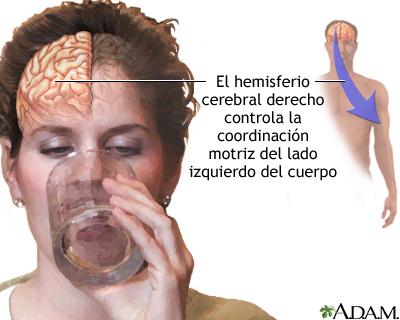 Mencionar las funciones intelectuales del cerebro