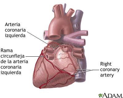 Arterias cardíacas posteriores