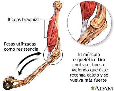 Ejercicio de fortalecimiento de los huesos