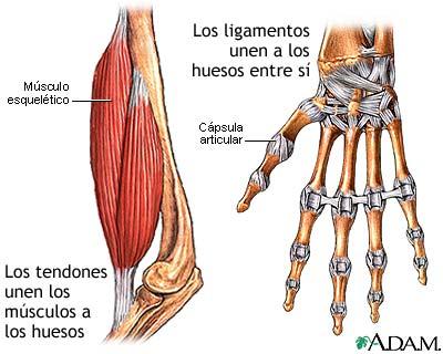 Tendones y ligamentos: MedlinePlus enciclopedia médica illustración