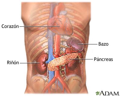 Duele la espalda y da en la parte derecha del vientre