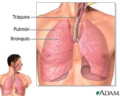 Funciones de las vias respiratorias inferiores