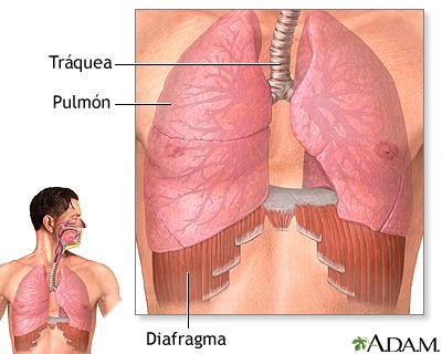 Diafragma y pulmones: MedlinePlus enciclopedia médica illustración