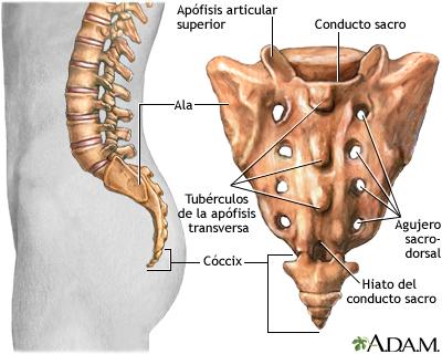 Sacro: MedlinePlus enciclopedia médica illustración