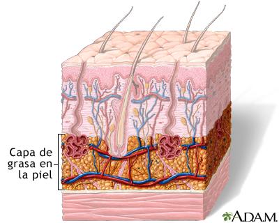 Capa de grasa en la piel