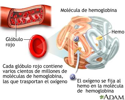Anemia: MedlinePlus enciclopedia médica