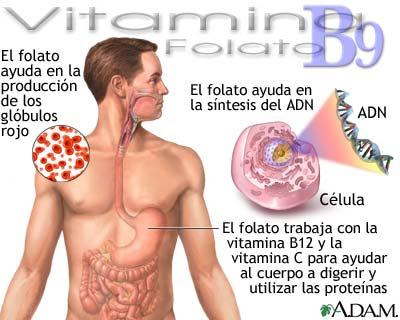 Beneficios de la vitamina B9