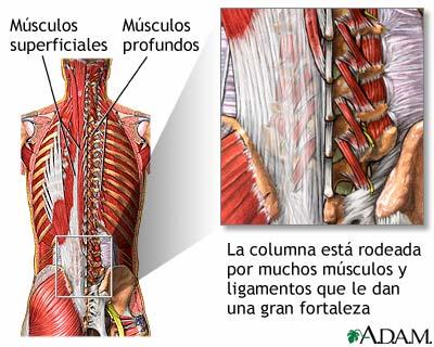 Estructuras de soporte de la columna