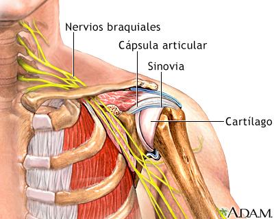 Articulación del hombro: MedlinePlus enciclopedia médica illustración