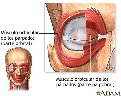 Músculos oculares