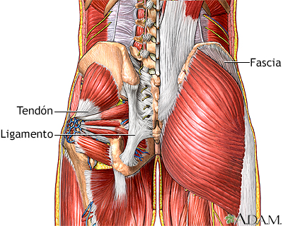 Dolor muscular