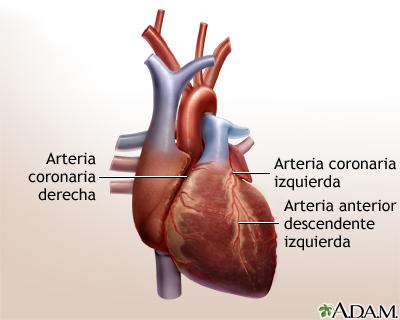 Cirugía de derivación cardíaca - Serie—Anatomía normal: MedlinePlus ...