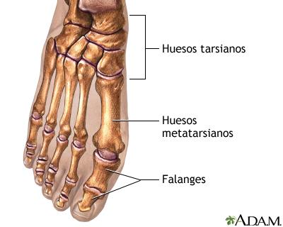 Eliminación del juanete - Serie—Anatomía normal: MedlinePlus ...