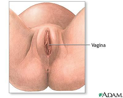 revisión Inglés vaginal