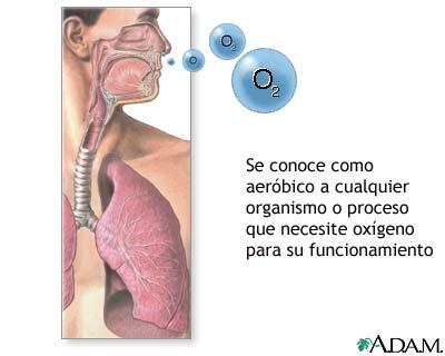 Organismos aeróbicos
